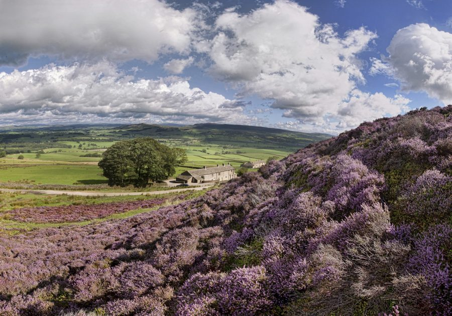 higher scarcliffe holiday home purple heather